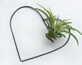 Wire Air plant holder - Heart Wire Wall Hanging