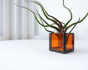 Single Stained Glass Cube with Tillandsia Bulbosa Air Plant
