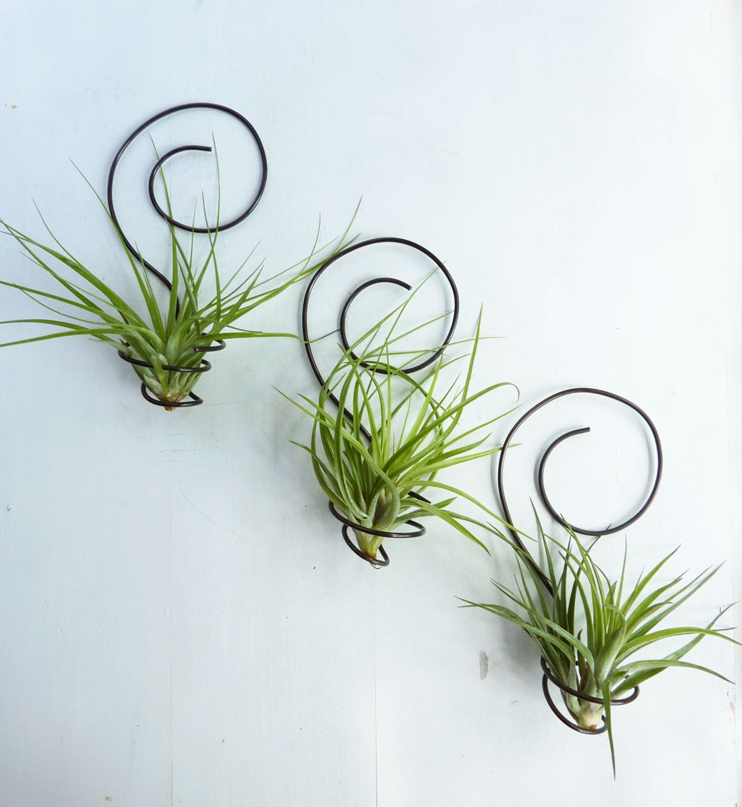 Reserved for shannon0401 three wire air plant holders for Air plant holder ideas