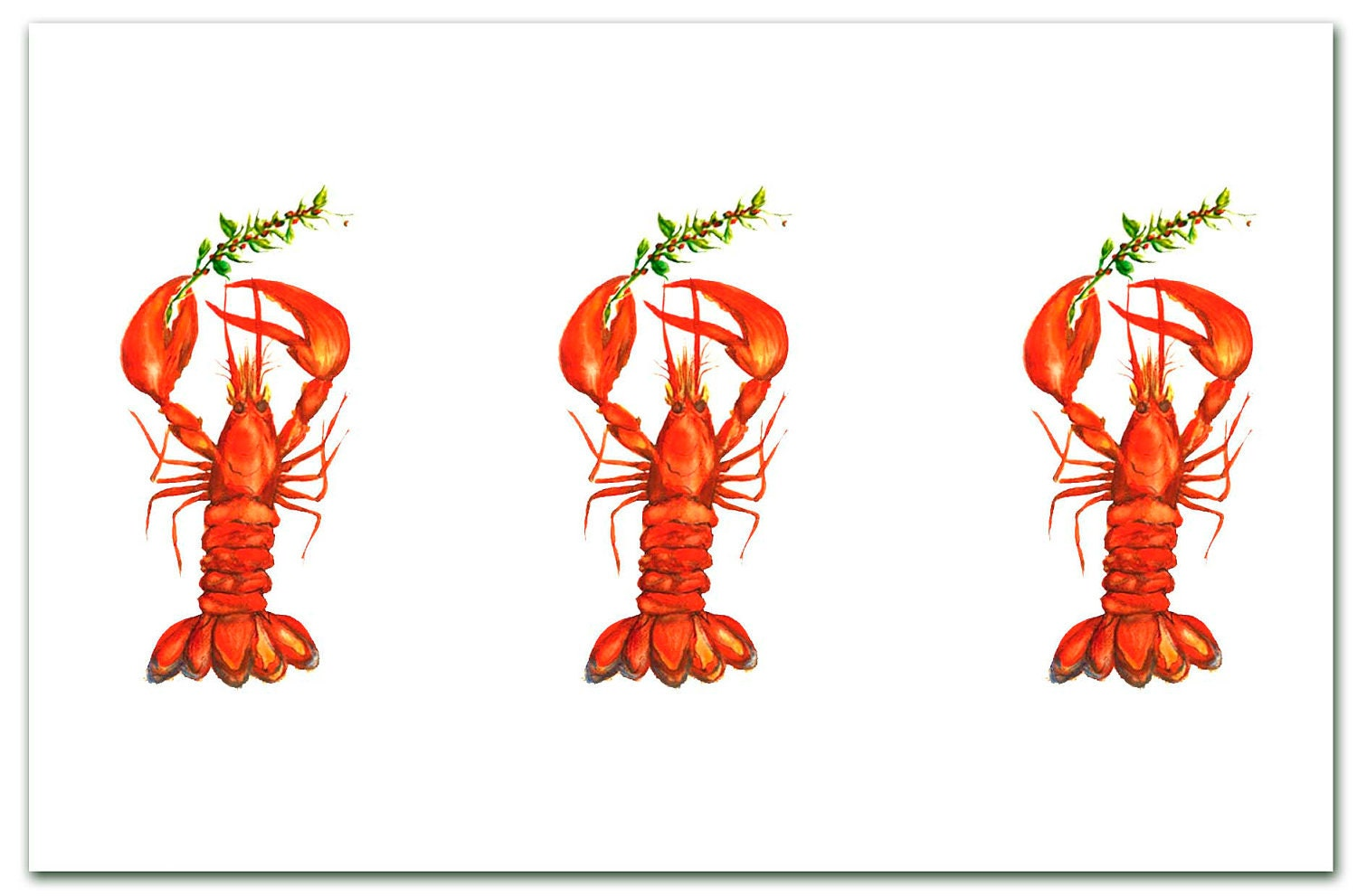 3 Lobsters holding holly Christmas. red .lobster holiday
