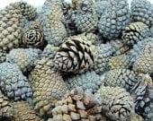 1/2 Pound Lavender Lodgepole Pinecones