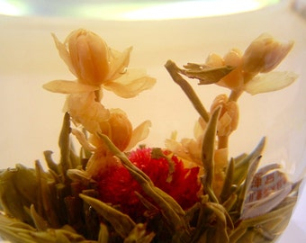 Supreme quality white tea blooming flowers of 2