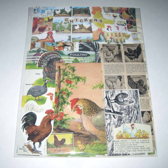 Chickens Ephemera Pack of 65 Pieces of Vintage Chickens for Altered Art