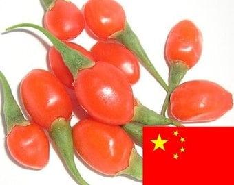 Goji Seeds - 1000 Certified Organic GOJI Berry Seeds From China