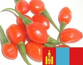Goji Seeds - 1000 Mongolian Certified Organic GOJI Berry Seeds