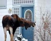 Photo Note Card Unexpected Visitor- Anchorage Alaska - 1 Unit