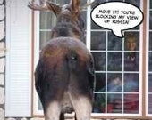 The Girl Next Door...  Sarah Palin