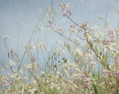Wild Grass 8x8 photograph - field of wild grass, herbs, home decor