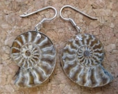 GMD Large Ammonite Earrings