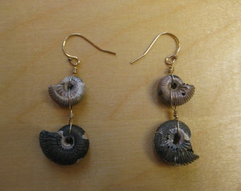 Insouciant Studios Pyrite Ammonite Earrings