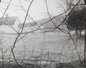 Vines - 10 x 10 fiber based fine art photograph