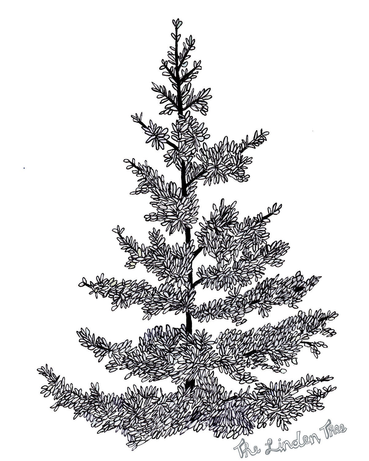 Pics For > Black And White Pine Tree Drawing