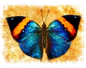 Butterfly Photograph Abstract Surreal Nature Photography Boys Room Decor Home Decor Gold Blue Orange Black Photo  Insect Wall Art Photograph