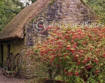 Stone Cottage, Irish Landscape, Fuschia Flowers, Ireland Photography, Fine Art Print, Home Decor, Red Flowers, Irish Decor, Green And Brown