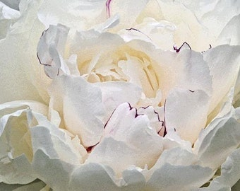 White Peony, Flower Photography, Metallic Paper, White Flower, Powder Room, Bedroom, Wall Decor, Light Blue Gray