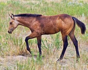 Mustang Photograph,  Horse Print,  Fine Art Artwork, Nature Photo, Wild Horse, Equine Decor, Animal Print, Wall Decor