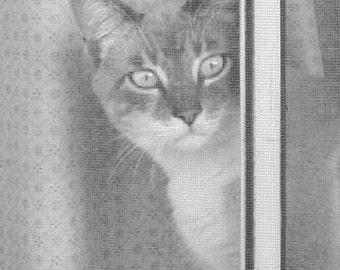 Cat Photograph, Gray Feline, Cat Lover, Tabby Photo, Cat Wall Decor, Childrens Room, Nursery Print, 5 x 7 Print, Fine Art, Animal Photo