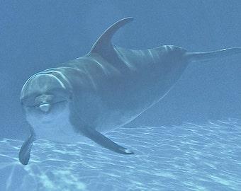 Dolphin Photography, Nature Print, Wildlife Photo, Blue Water, Florida Print, Dorm Decor, Fine Art, 5 x 7 Photo, Wall Decor Underwater Decor