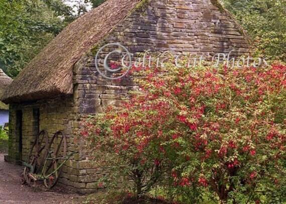 Stone Cottage, Irish Landscape, Ireland Photography, Fine Art Print, Home Decor, Fuschia Flowers, Red Flower, , Irish Decor, Green And Brown