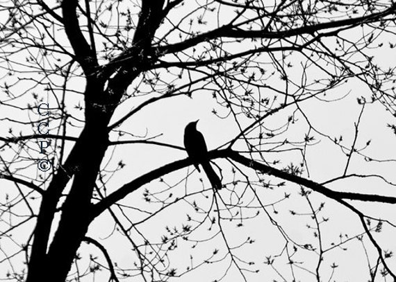 Black And White Bird In Tree Nature Print Tree Photography Fine Art Photo Bird Silhouette Lace Tree Print Wall Decor, Apartment Decor