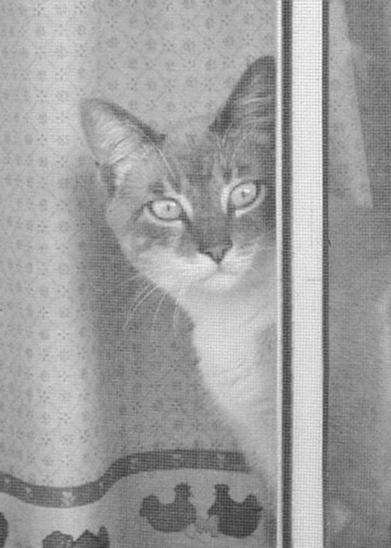 Cat Photography Gray Feline Cat Lover Photography Tabby Photo Print Only  5 x 7 Fine Art Cat Wall Decor Watching the World Through Screen