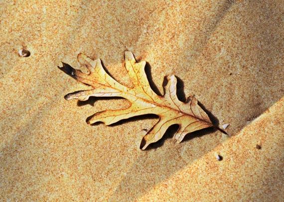 Beach Decor Oak Leaf Photography Nature Print Golden Oak Leaf Beige Brown Sand Dune Minimalist Fine Art Beige and Gold Wall Home Decor