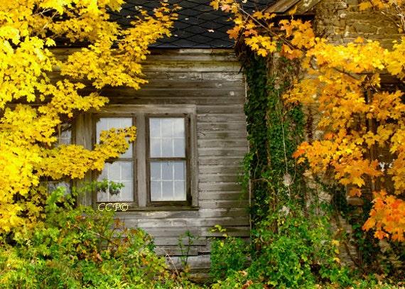 Farm House Photography Golden Maples Window Photo Nature Print Gold Orange And Green Decor Fine Art Photgraph