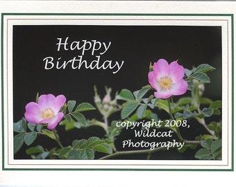 Wild Rose Birthday Card Photograph