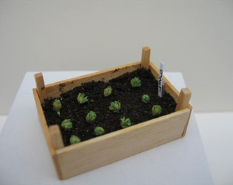 A one 12th scale Miniature seed box of 'lettuces'
