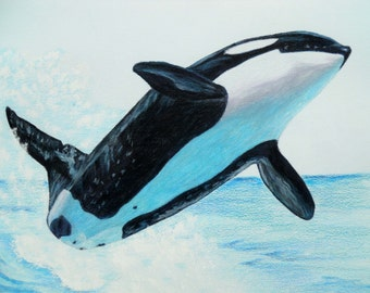 Whale Orig. Colored Pencil-Print