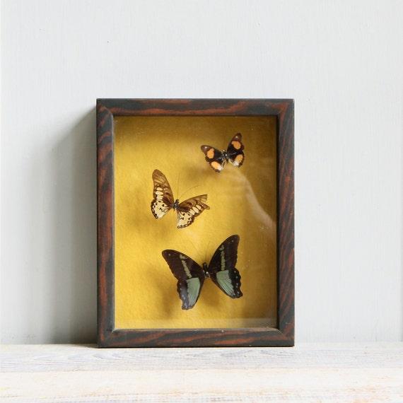Vintage Butterfly Specimen Shadowbox