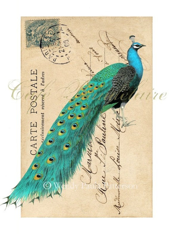 The Peacock petite...Carte Postale Giclee Collage Print