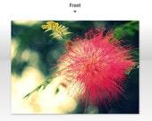 blank folded note card (5), powder puff mimosa flower, original photo