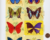 BUTTERFLIES  English DieCuts  Learning Tools