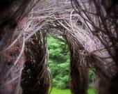 8 X 10 Fine Art Photographic Print - Magical Woodland Doorways