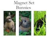 Magnet set of 3, Bunny Rabbits make great pets