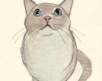 SALE GIFT SET - 5 X  Pussy Cats  - 4 X 6 prints
