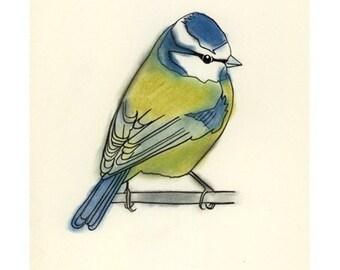 Blue Tit Bird Art bird decor -  Little Blue Tit -  4 X 6 print - 4 for 3 SALE
