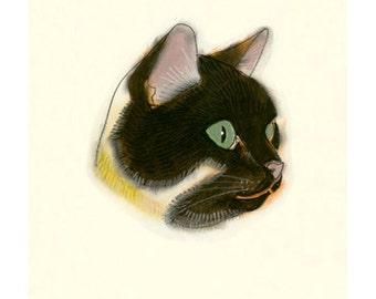 Tortoishell shell Cat Art -    4 for 3 SALE - Reflecting - 4 X 6 print
