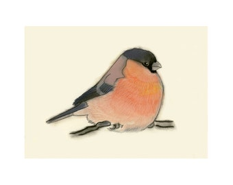 Chaffinch Bird Artwork - 4 for 3 SALE Chaz -  6 X 4 print