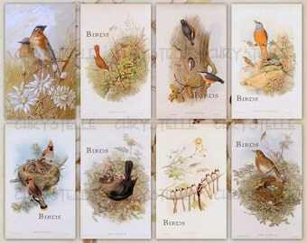 Birds Collage 2 digital collage sheet