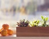 Modern Herb or Succulent Planter Box from Reclaimed Cedar