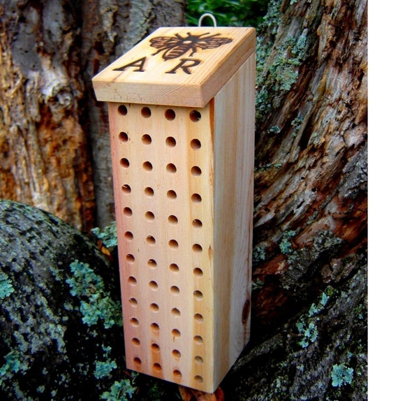 Blue Orchard Mason Bees Mason Bee Box Blue Orchard