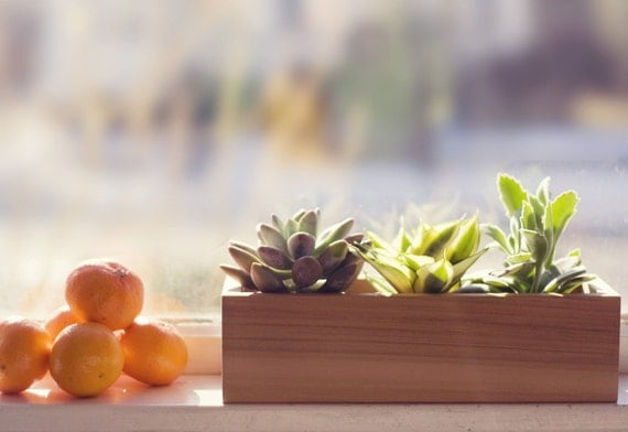Herb Planter or Succulent Planter, Modern Style from Reclaimed Wood