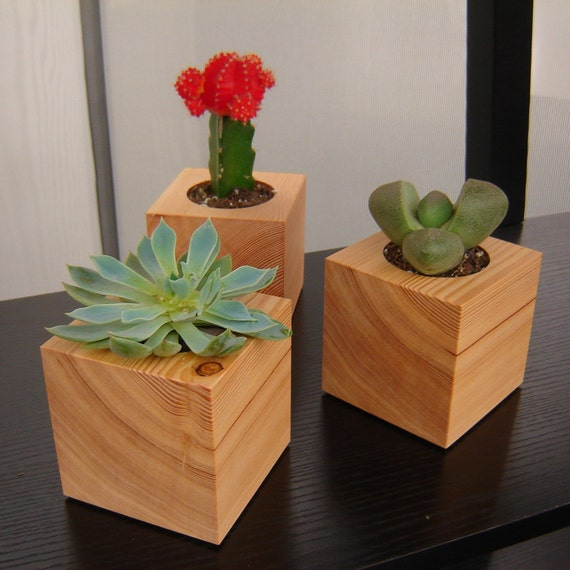 Group of three succulent planters in reclaimed wood