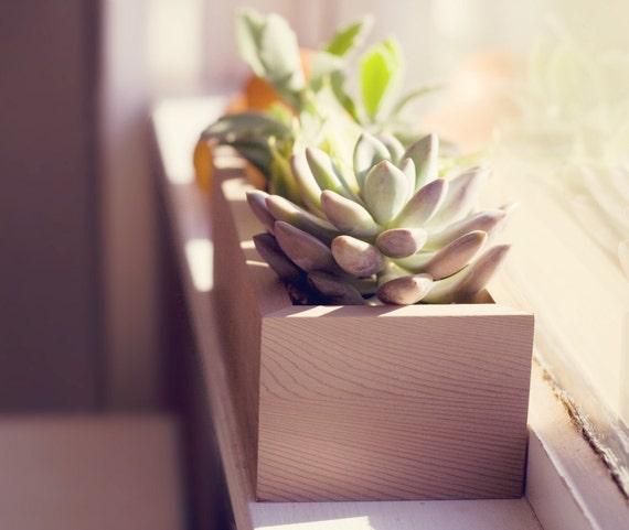 Wooden Succulent Planter Cactus Planter Box