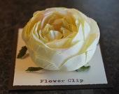 Cream Cabbage Rose - Flower Clip