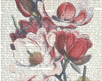 Magnolia Print over Antique Page