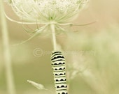 "Queen Anne's Lace-  soft green tones on 8x10"" (20x25cm) fine art print from Long Grass Series"