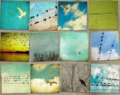 Bird photography, nature photos, birds, bird art, tweet, bird on wire, seagull, crow, raven, avian art, nursery art, wall art, bird pictures
